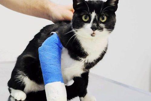 ortopedico veterinario caserta ortopedia san nicola la strada
